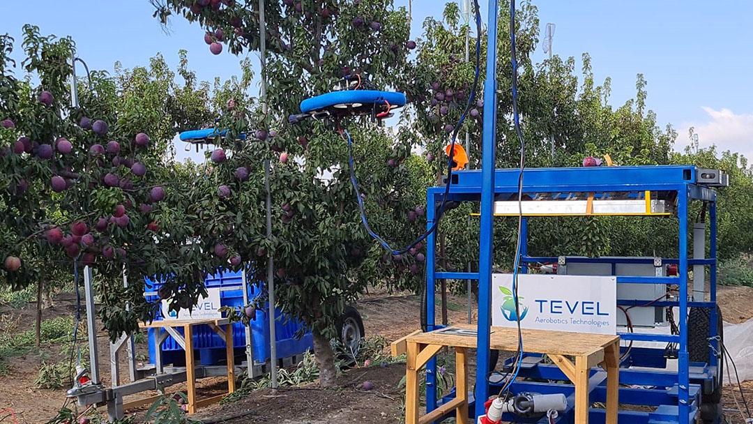 De autonome platforms dienen elk als een hub voor maximaal 6 oogstdrones. De platforms navigeren door de boomgaarden en leveren de kracht en reken/verwerkingskracht aan de quadcopterdrones. Eenmaal geplukt wordt het fruit in een container op het platform geplaatst. Foto: Tevel
