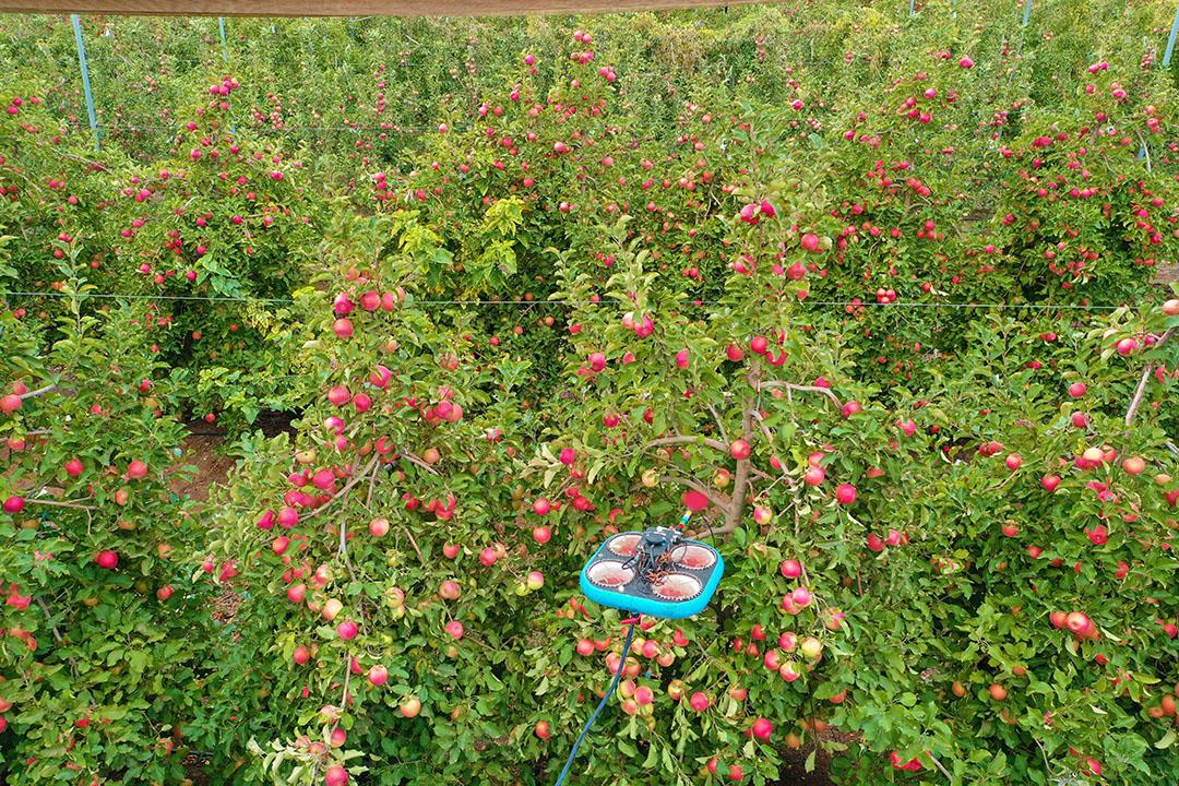 """Een foto van het plukken van appels. """"We plukten fruit van 4 tot 5 meter hoogte waar de boomgaard niet gesnoeid was."""" Foto: Tevel"""